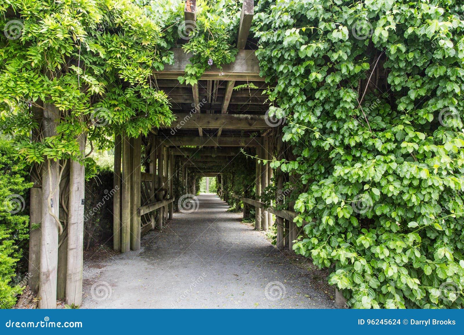 Weg Durch Garten Laube Stockfoto Bild Von Spur Wild 96245624