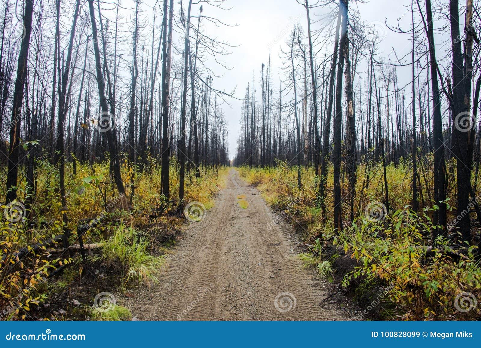 Weg durch gebrannten Wald