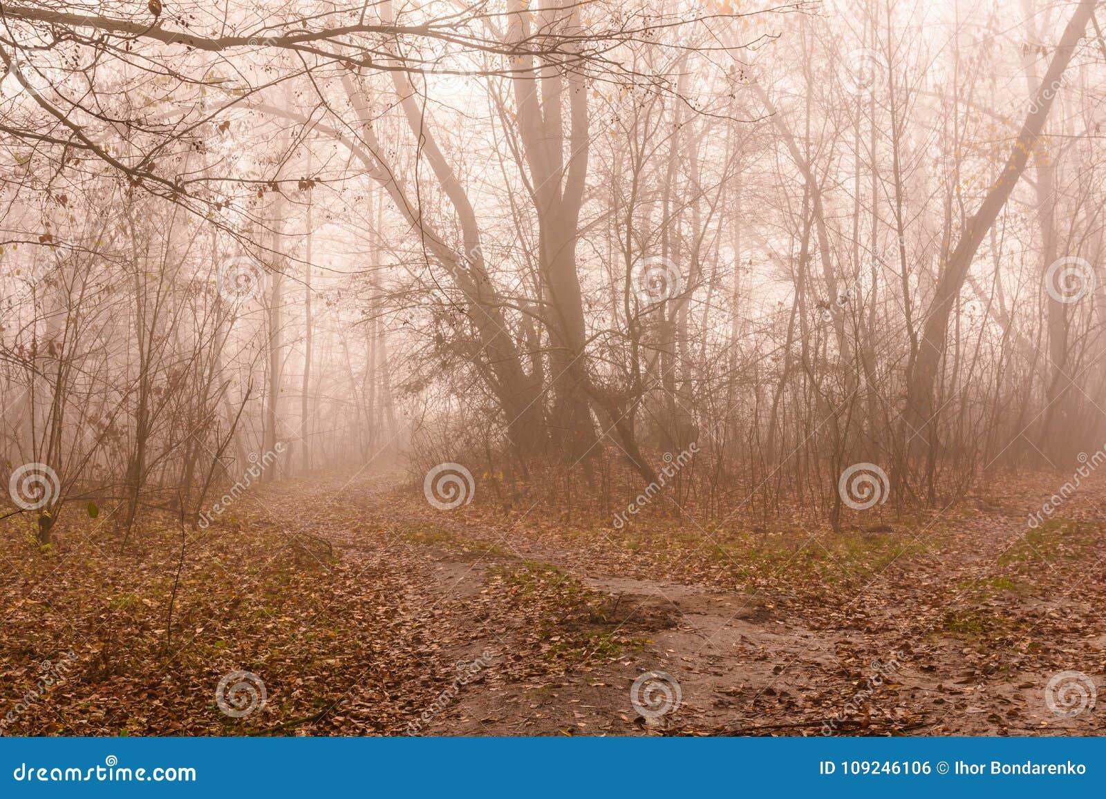 Weg in een mistig bos op koude de herfstdag