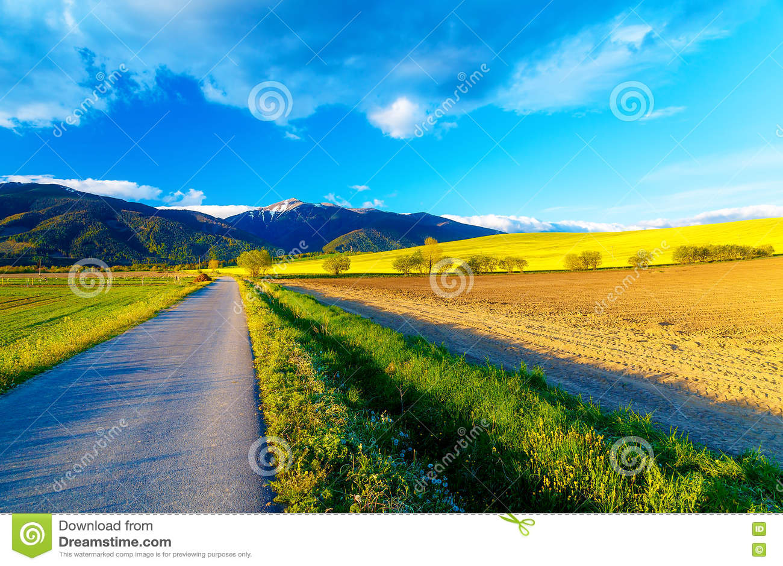 Weg in een mooi land met weiden en bloeiend gebied en sneeuwberg op achtergrond slowakije - Een hellend land ontwikkelen ...