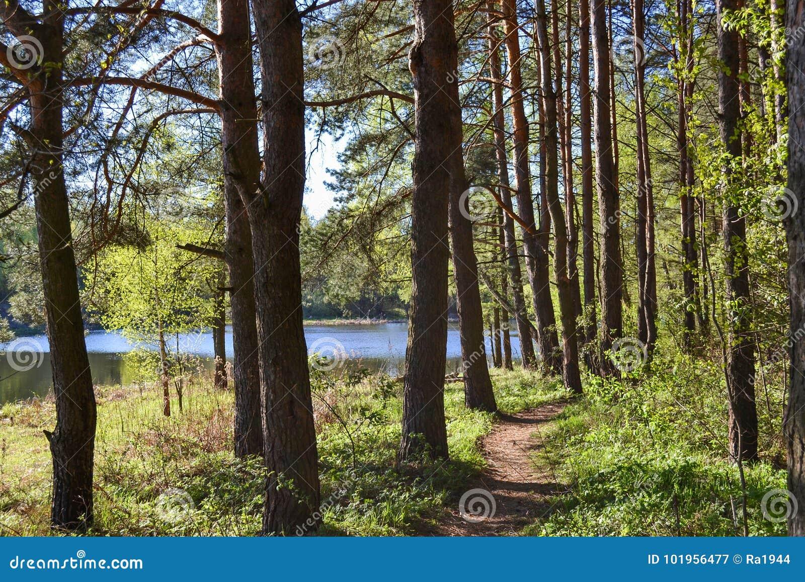 Weg für Wege im Forest Park nahe dem Fluss Früher Morgen des Frühlinges Russland
