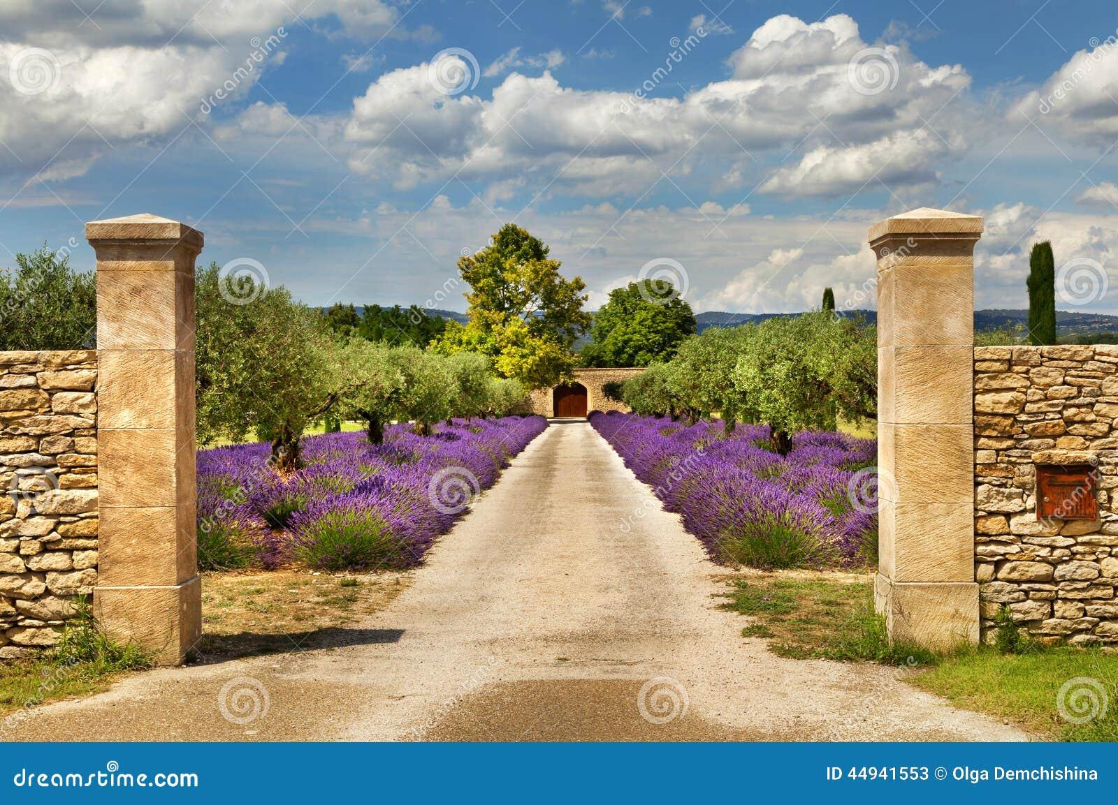 weg mit lavendel in provence stockbild bild von eingang lavendel 44941553. Black Bedroom Furniture Sets. Home Design Ideas