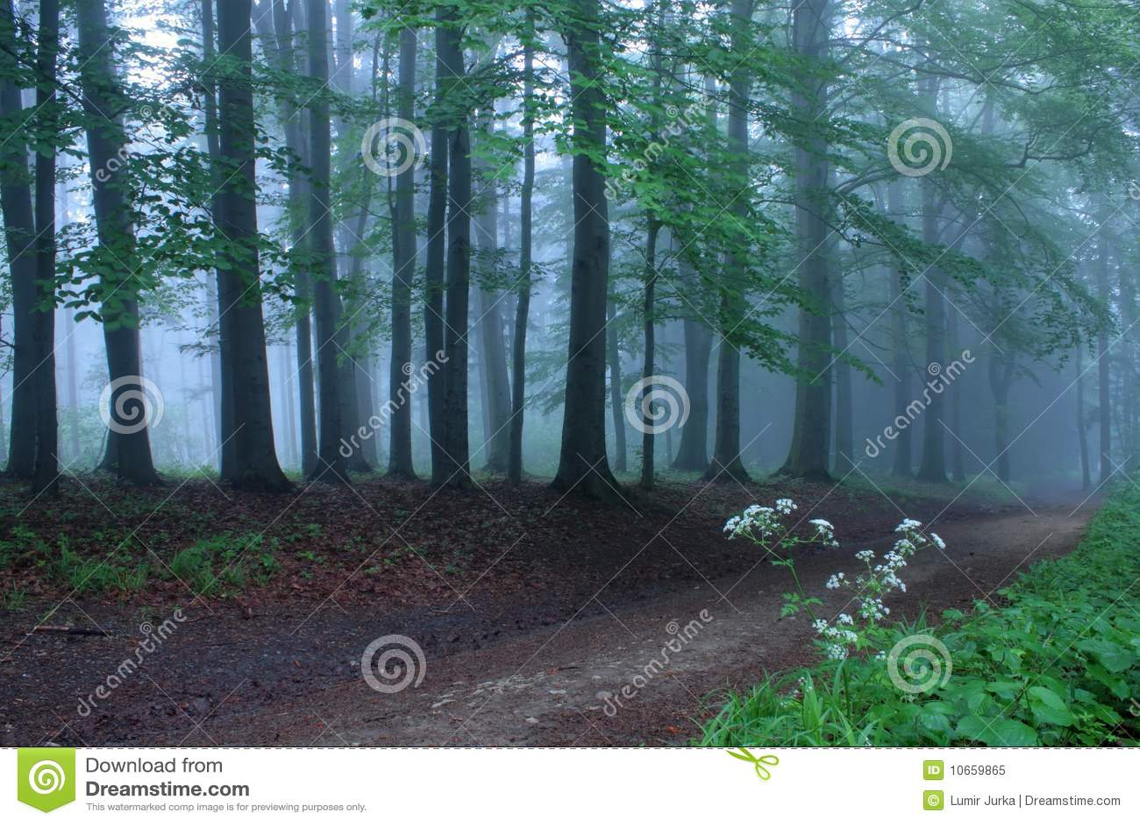 Weg in mystic bos