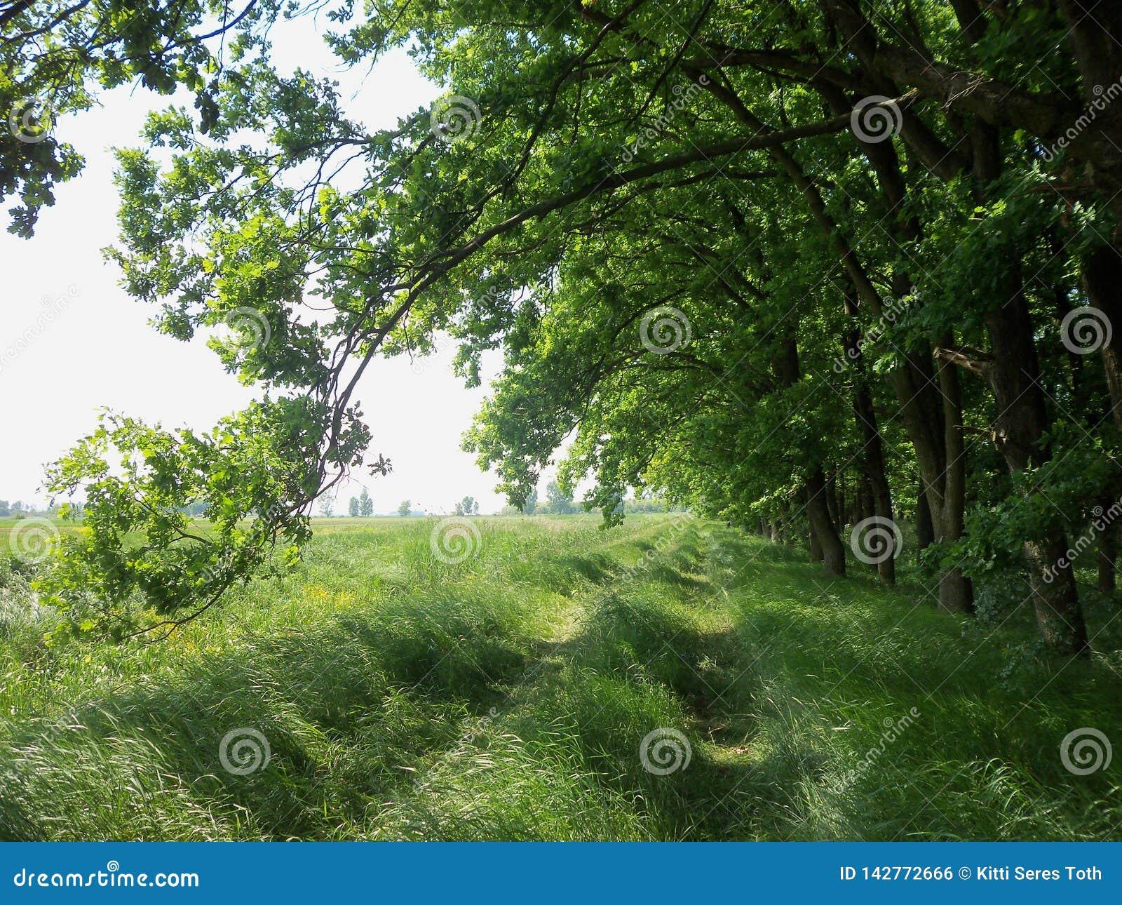 Weg tussen het bos en de gebieden