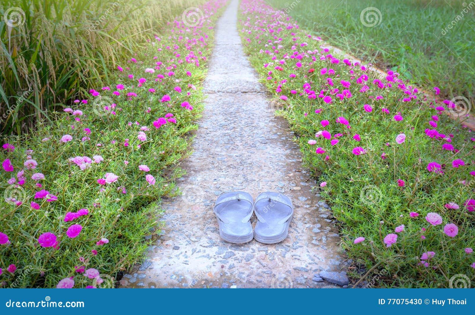 Weg van de Portulaca grandiflora bloem