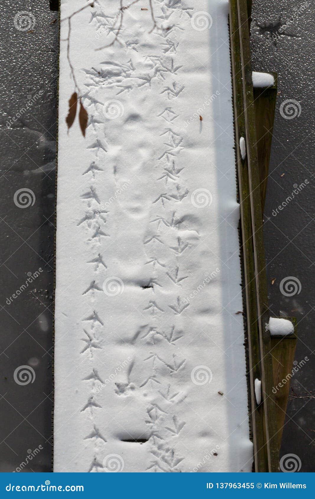 Weg van vogelvoetafdrukken de verse sneeuw