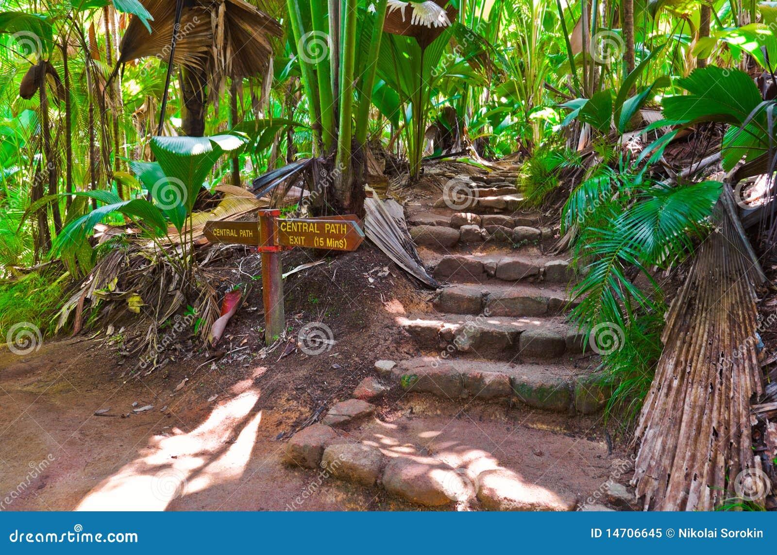Weg in wildernis, Vallee DE MAI, Seychellen