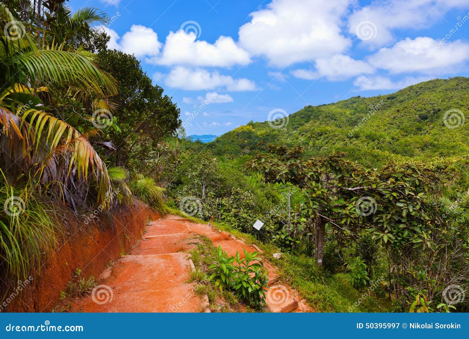 Weg in wildernis - Vallee DE MAI - Seychellen