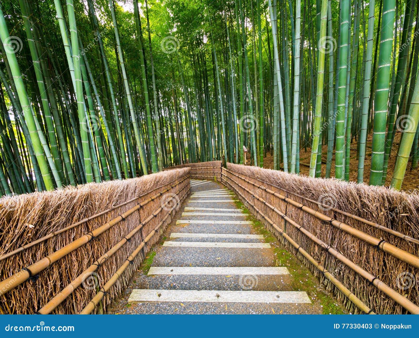 Weg Zum Bambuswald Arashiyama Kyoto Japan Stockbild Bild Von