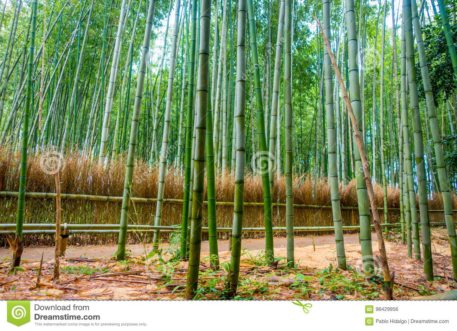 Weg Zum Bambuswald Arashiyama Kyoto Japan Stockfoto Bild Von