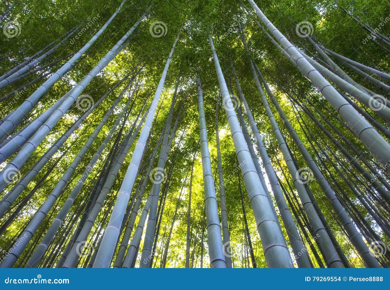 Weg Zum Bambuswald Arashiyama Kyoto Japan Vibrierender Morgen