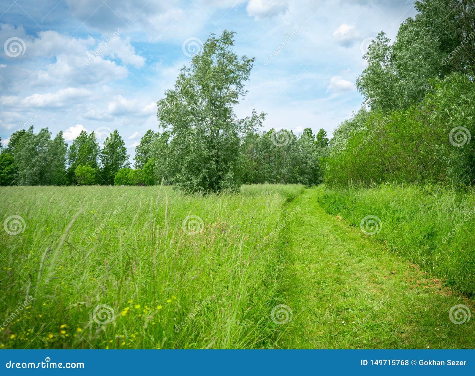 Weg zur Natur unter blauem Himmel