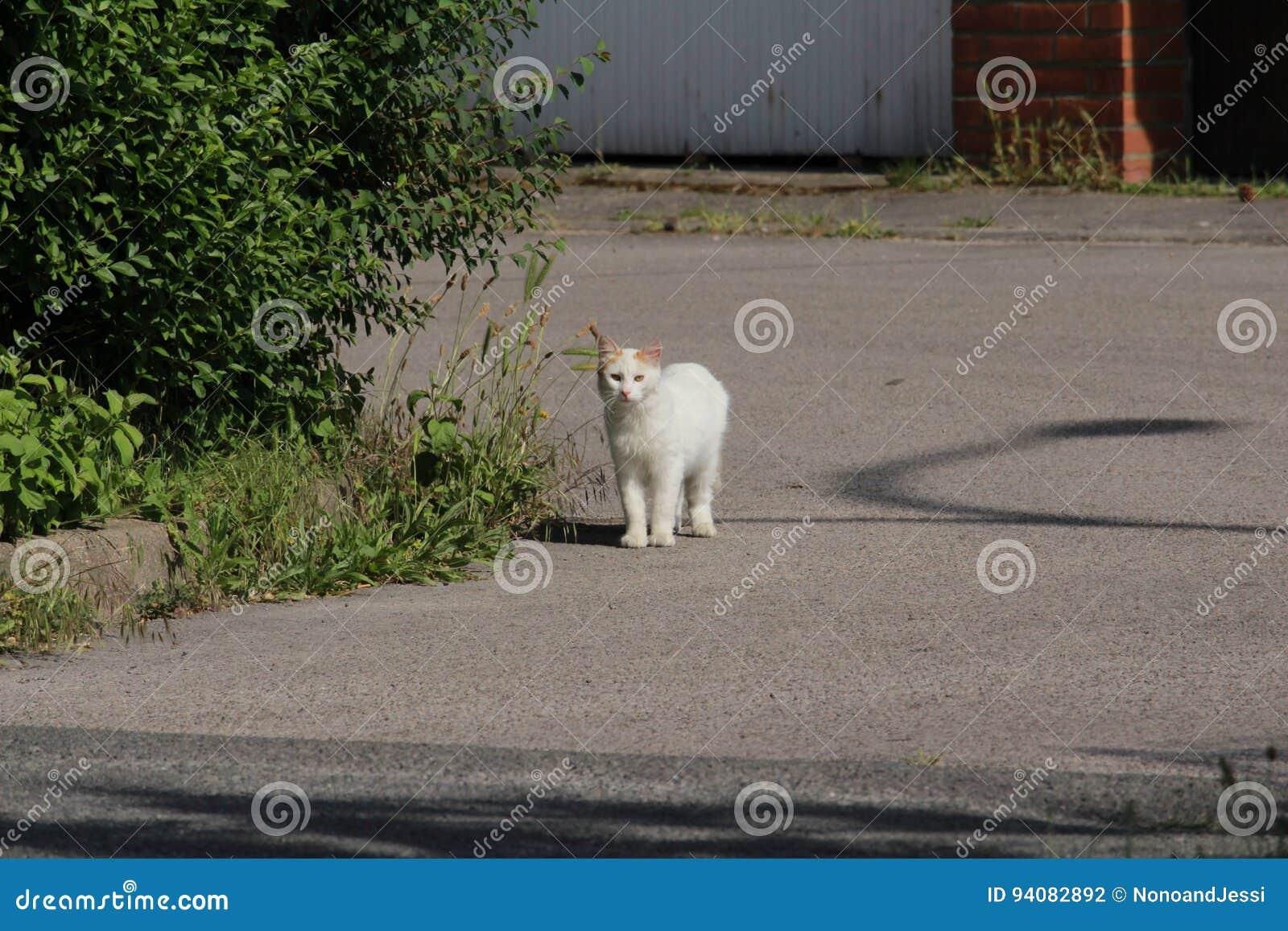 Wege einer Weißangora-Katze draußen
