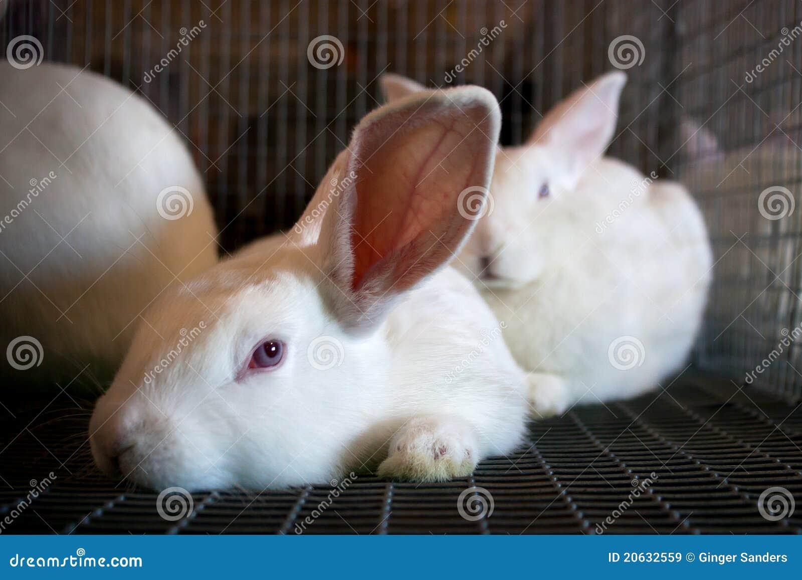Tolle Drahtkäfige Für Kaninchen Herstellen Galerie - Elektrische ...