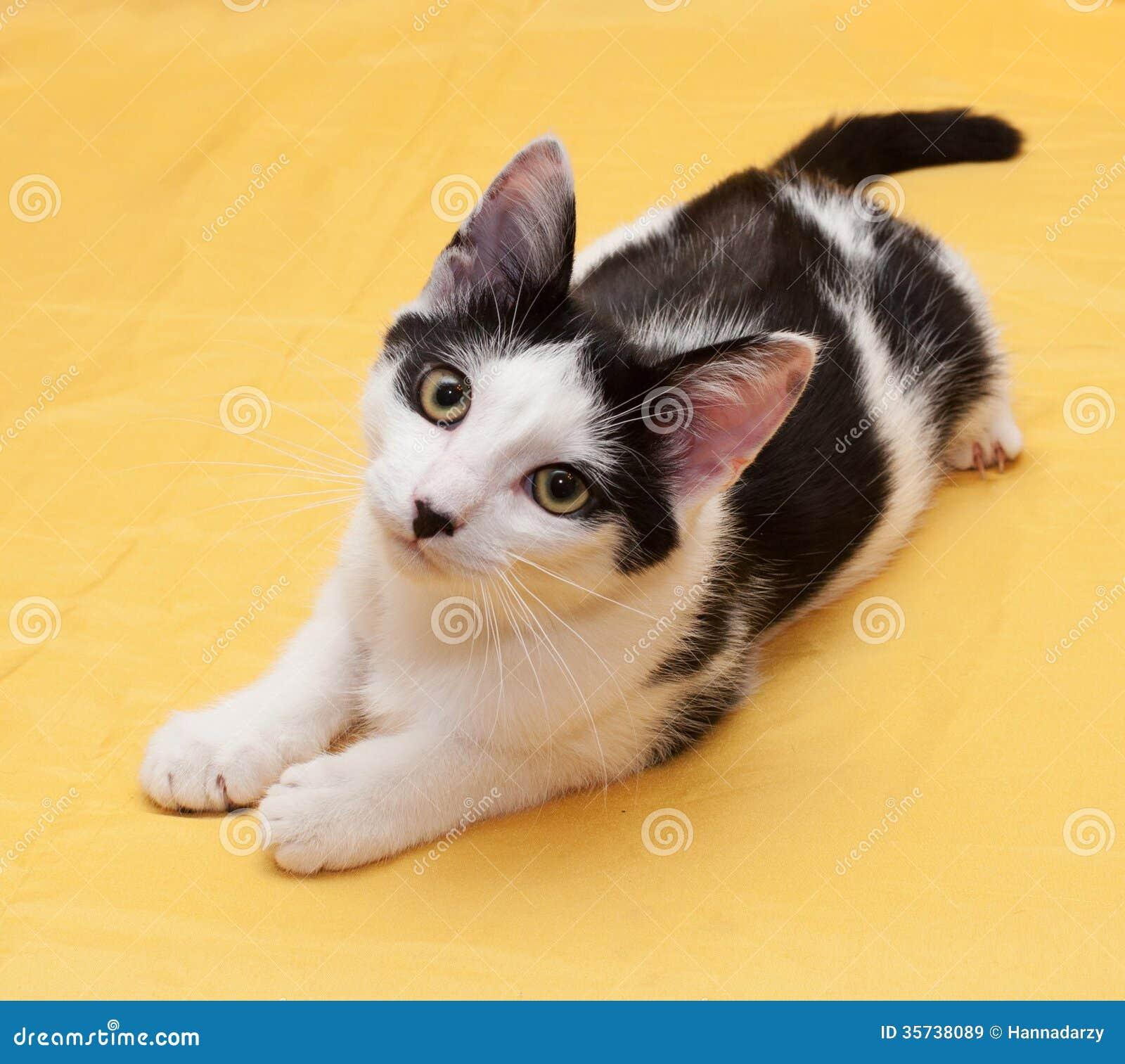 Weiße Katze Mit Dem Jugendlichen Der Schwarzen Flecke, Der