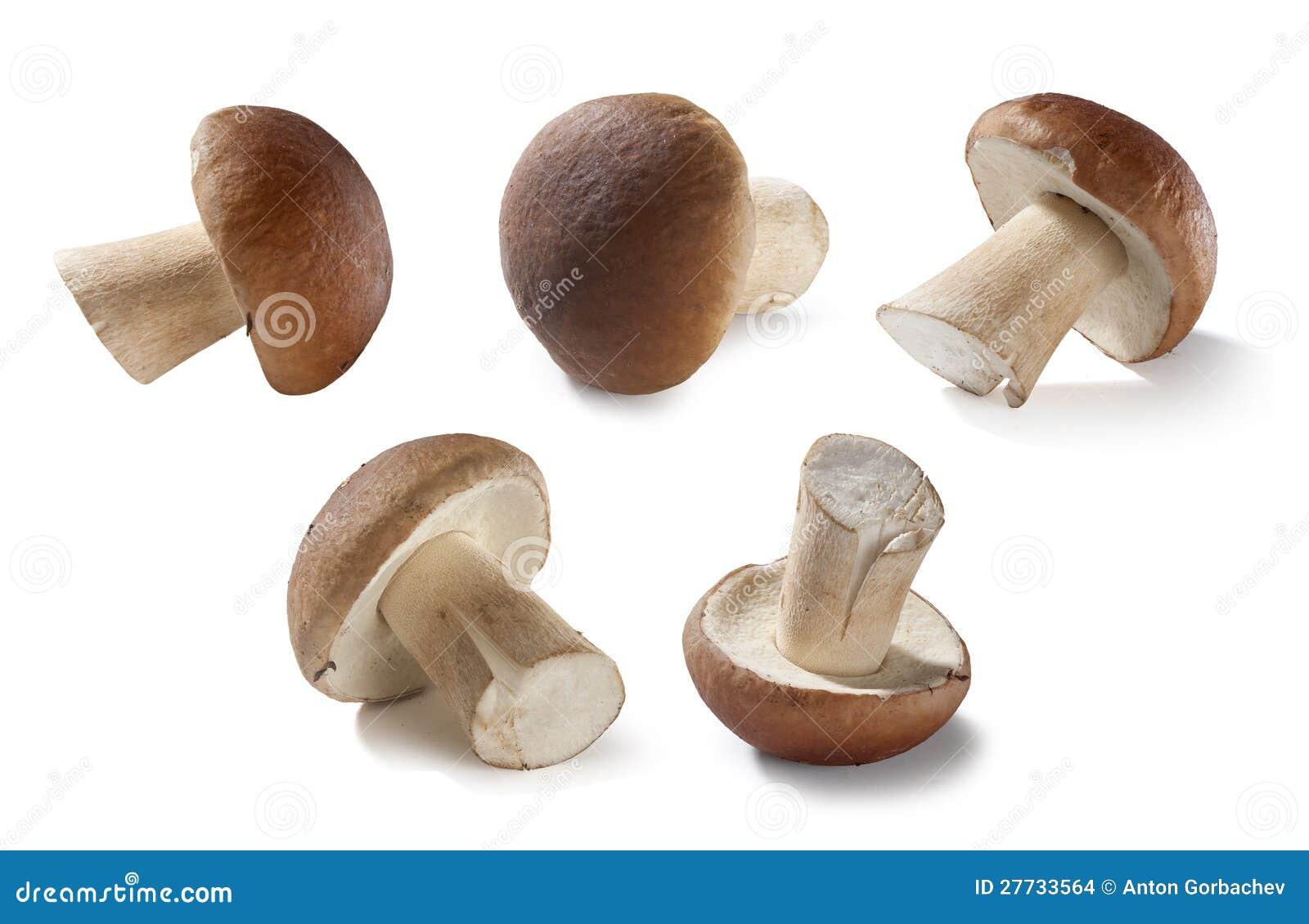 Weiße Pilze