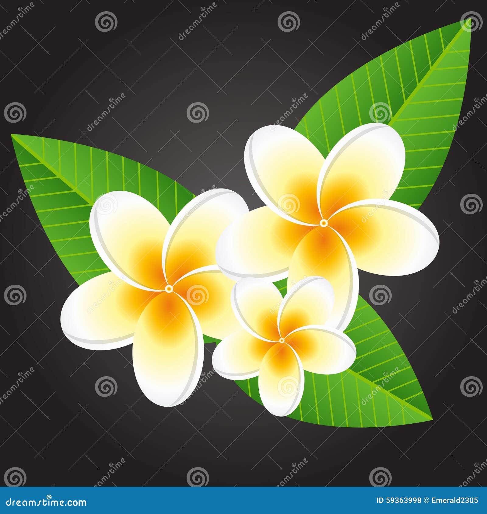 Weiße Plumeriablumen