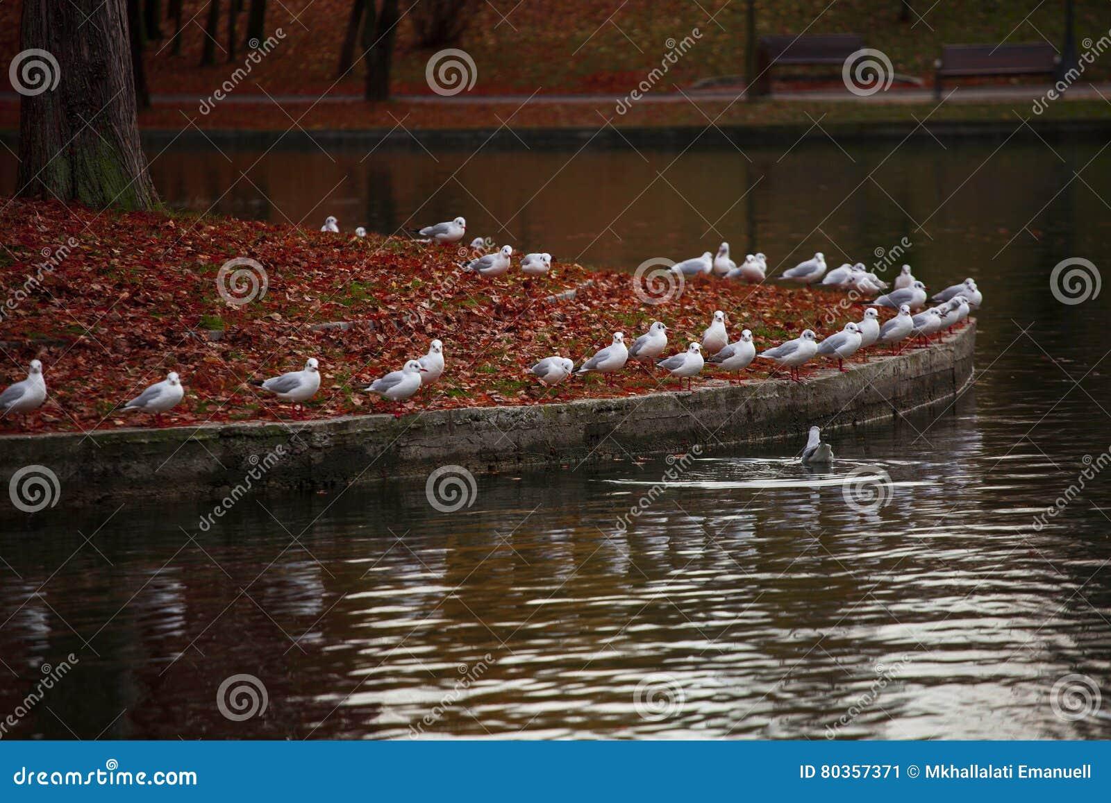 Weißer Angriff der Vögel