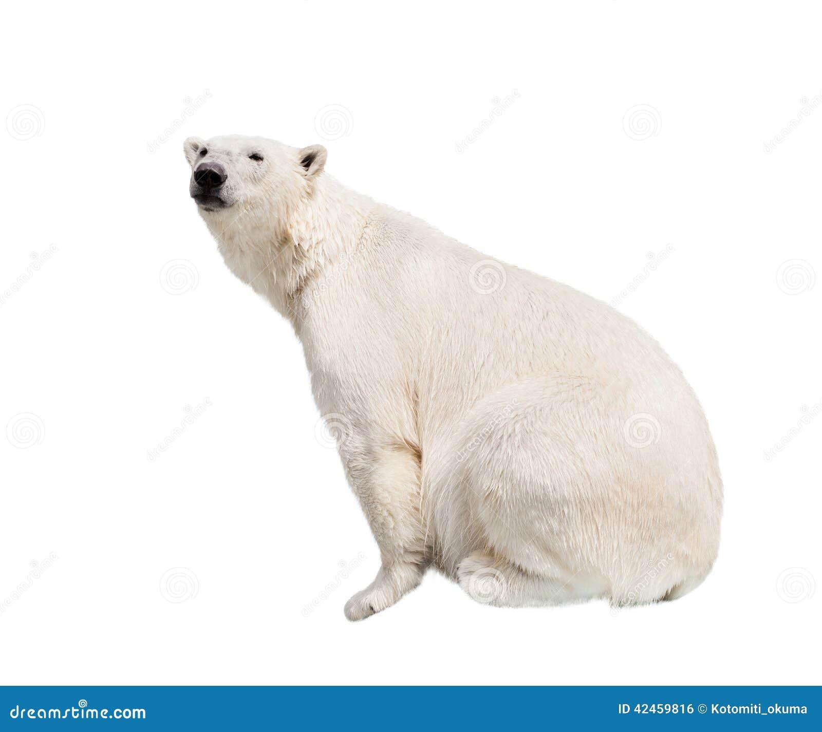 Weißer Eisbär