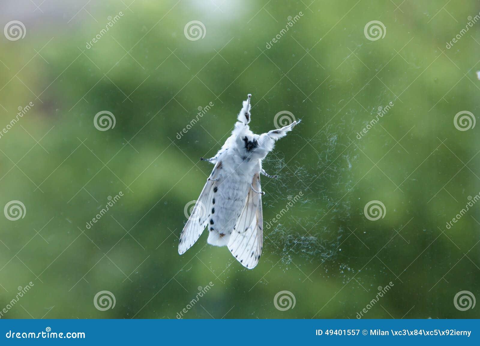 Download Weißer Ermine stockbild. Bild von tier, wald, sitting - 49401557