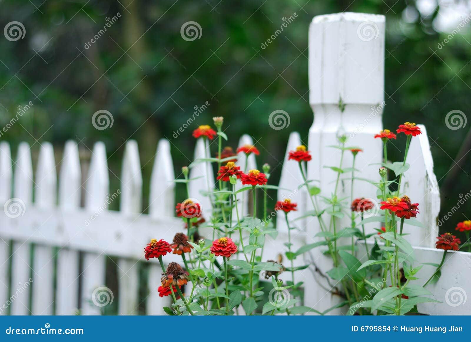 Weißer Gartenzaun Und Zinnias Stockfoto Bild