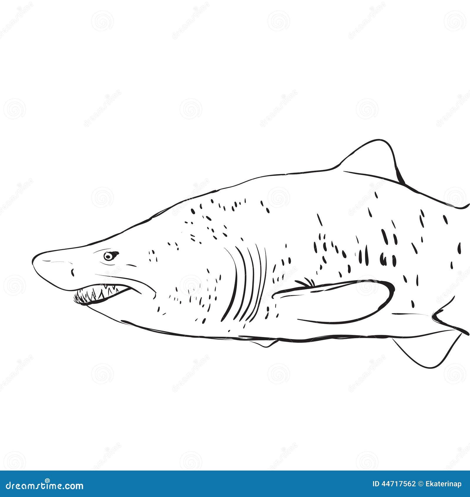 Großartig Große Weiße Hai Malvorlagen Zum Ausdrucken Bilder ...