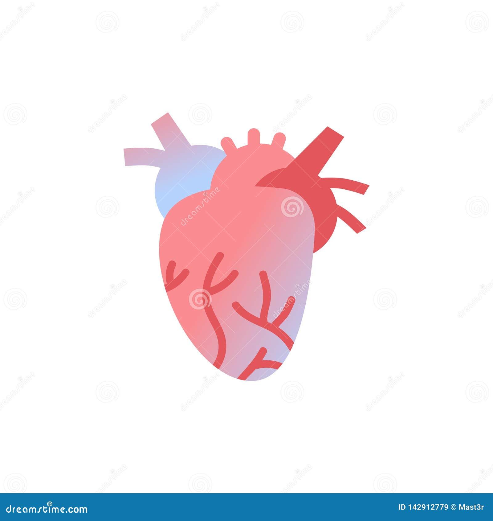 Weißer Hintergrund des anatomischen des Organanatomiegesundheitswesens des menschlichen Körpers der Herzikone Konzeptes medizinis