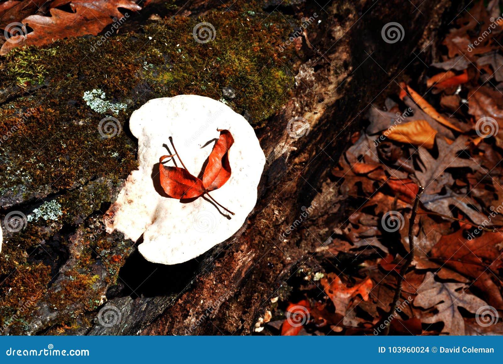 Weißer Pilz