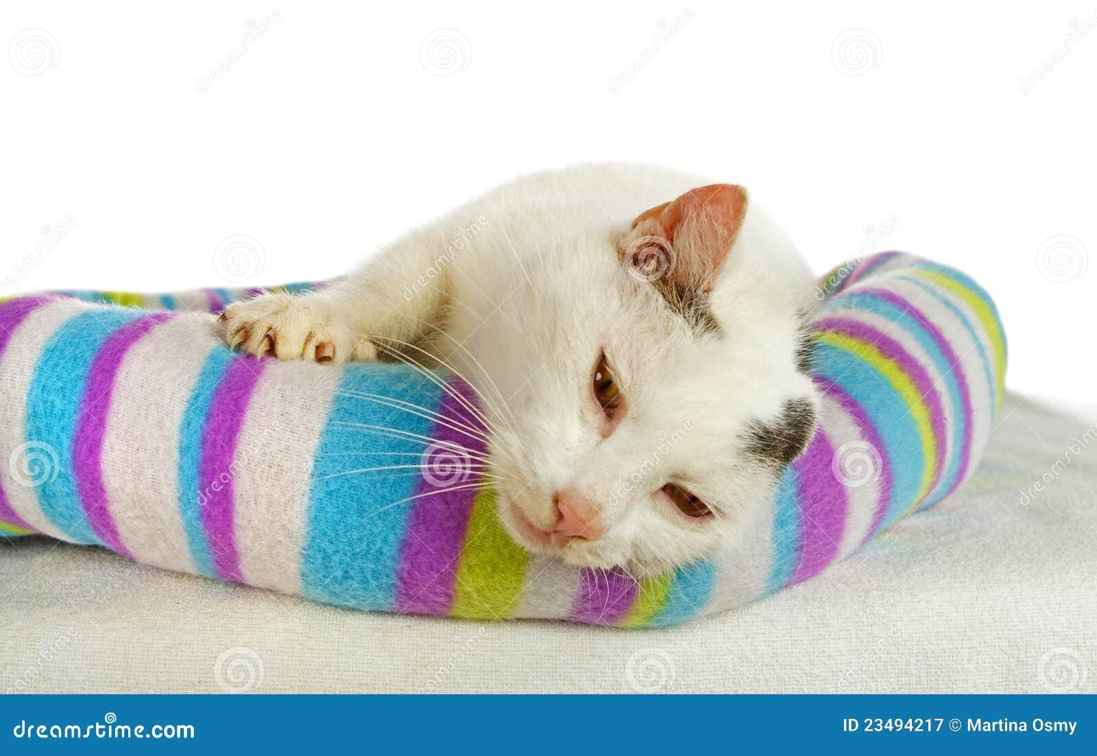 Weißer Tomcat in seinem Katzebett