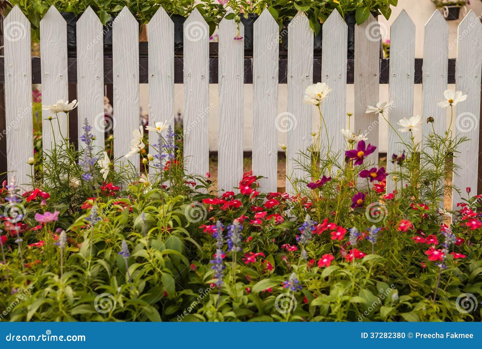 Weißer Zaun Mit Blumen Stockfoto Bild