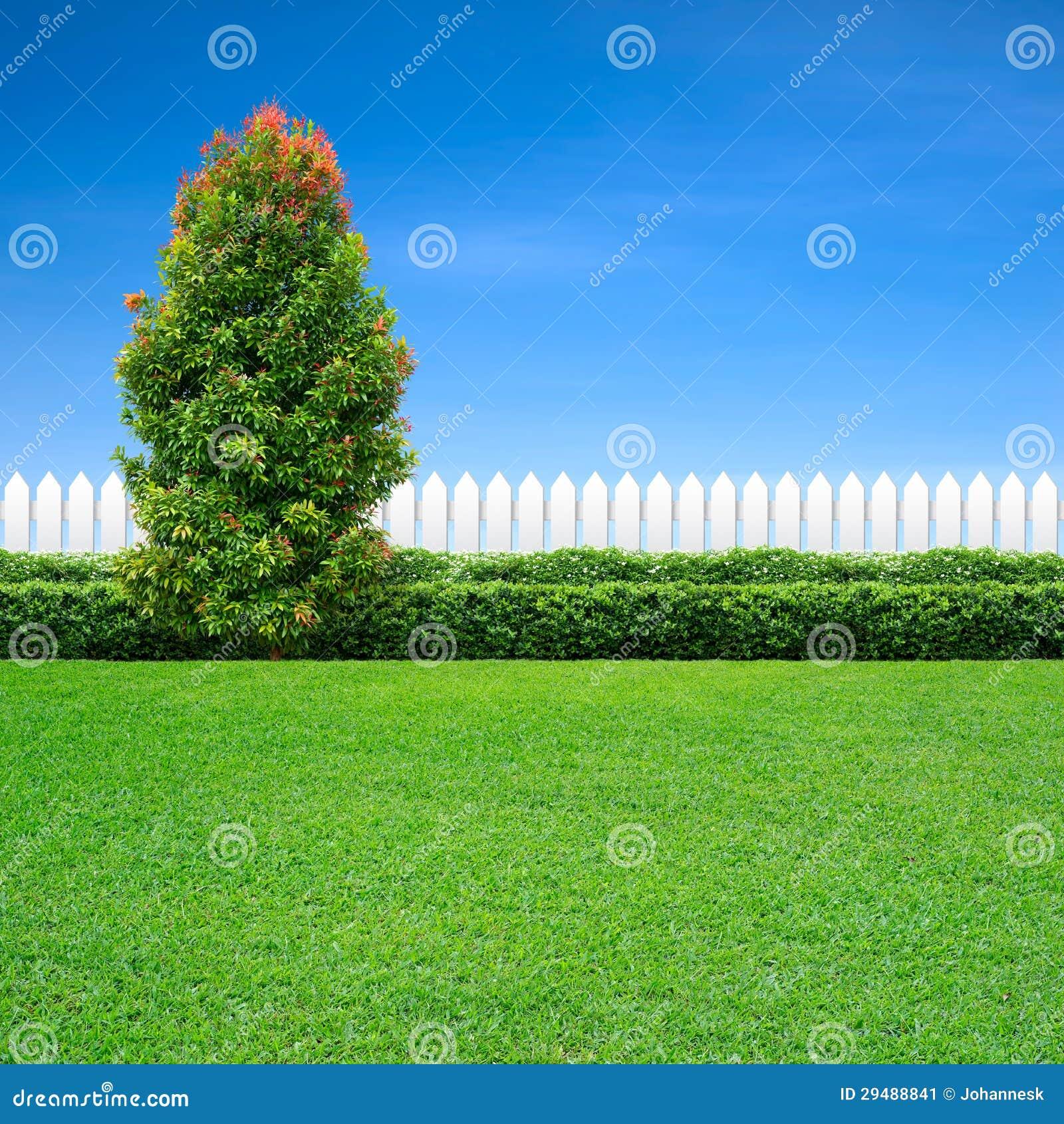 Weißer Zaun Und Grüner Baum Stockbild Bild