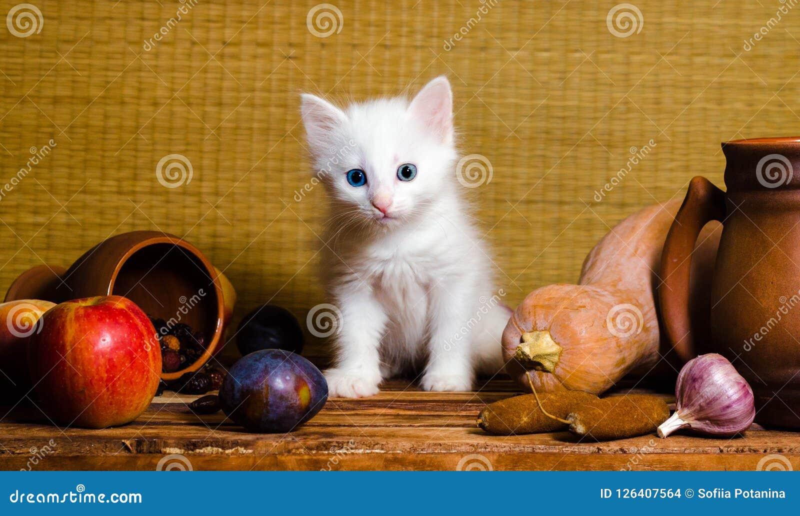 Weißes flaumiges Kätzchen des Herbststilllebens, das auf einem Holztisch sitzt