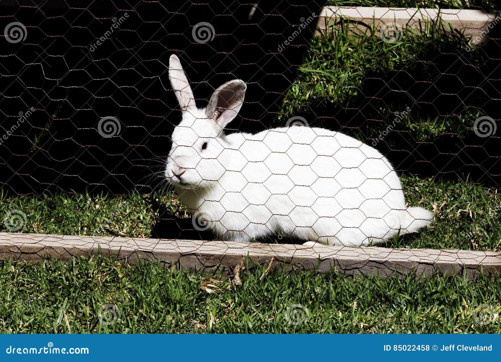 Berühmt Maschendraht Kaninchen Zeitgenössisch - Elektrische ...