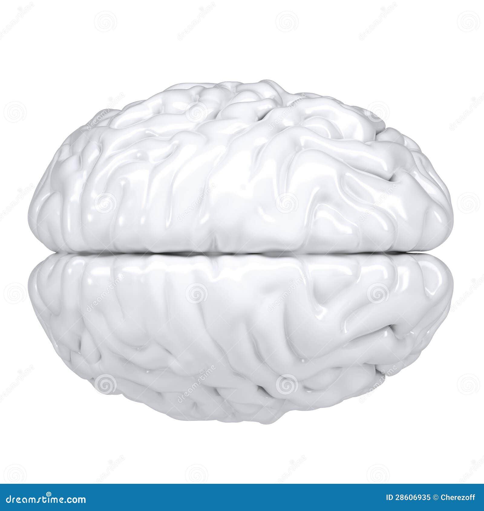 Fantastisch Gehirn 3d Anatomie Zeitgenössisch - Menschliche Anatomie ...