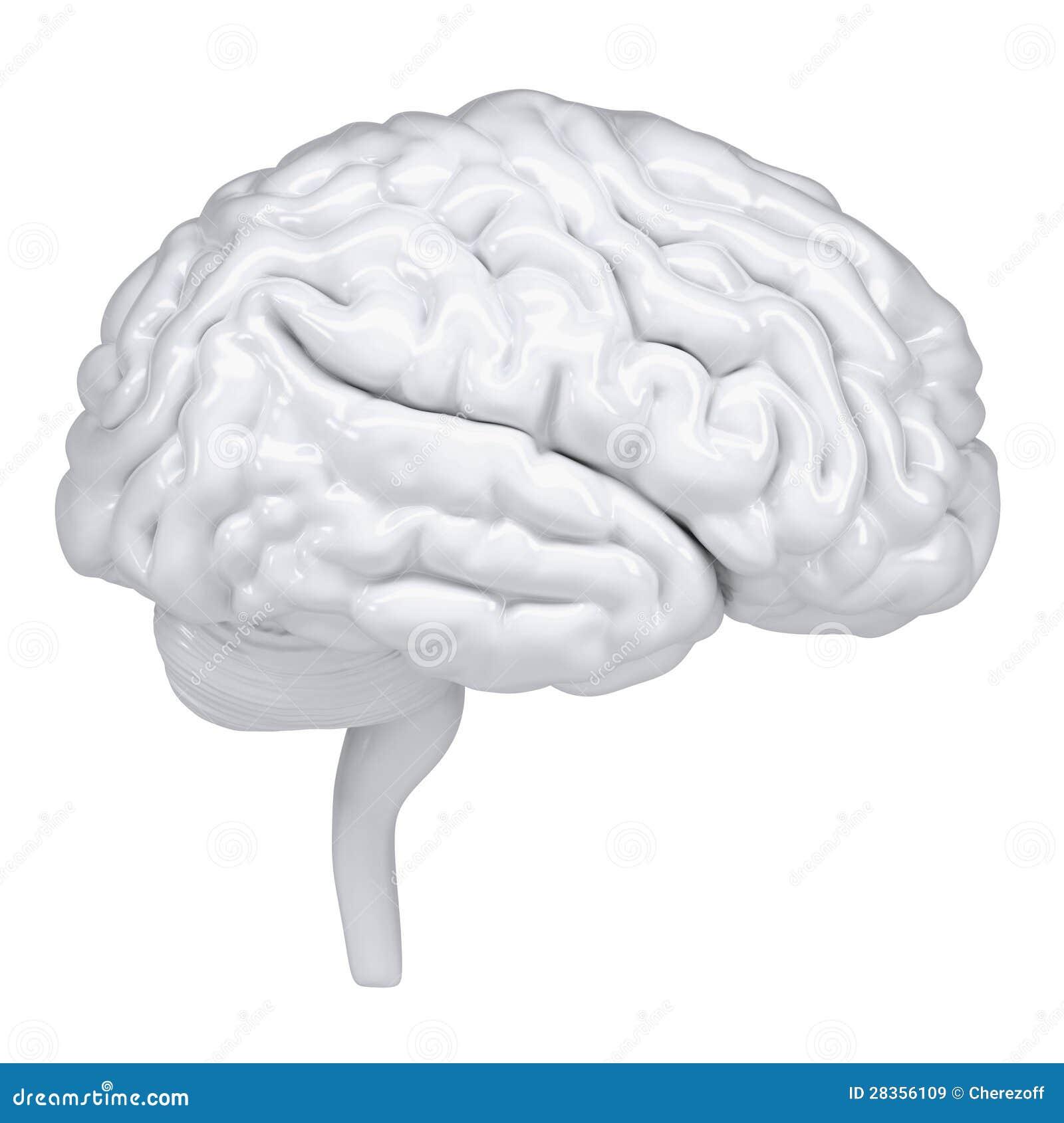 Fantastisch Anatomie Des Gehirns Ct Ideen - Menschliche Anatomie ...