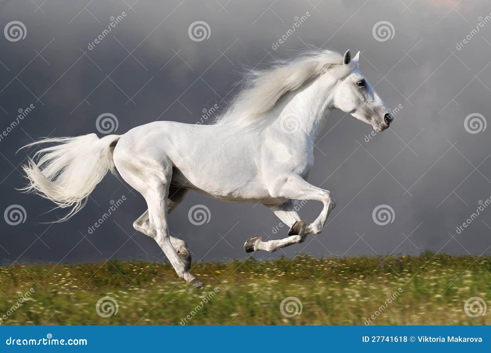 Weißes Pferd läuft auf den dunklen Himmelhintergrund