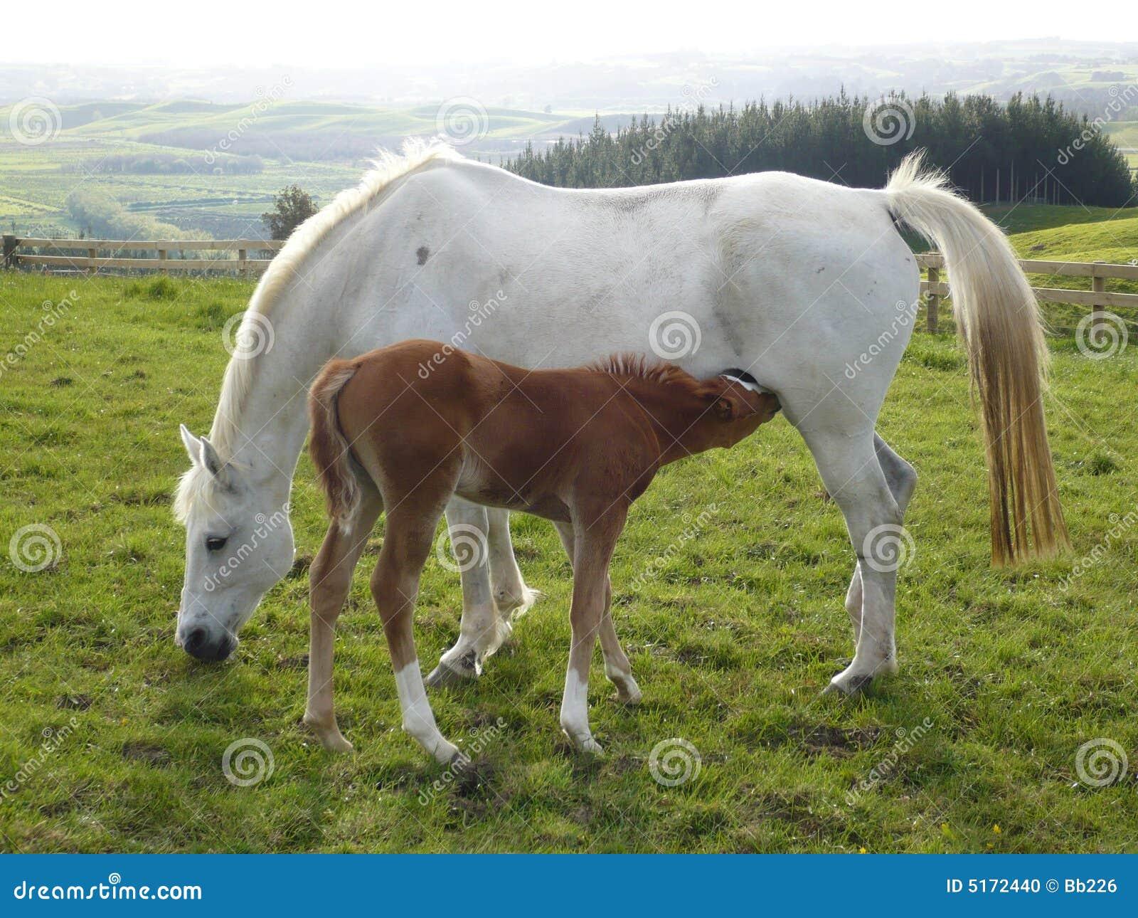 Weißes Pferd und Fohlen