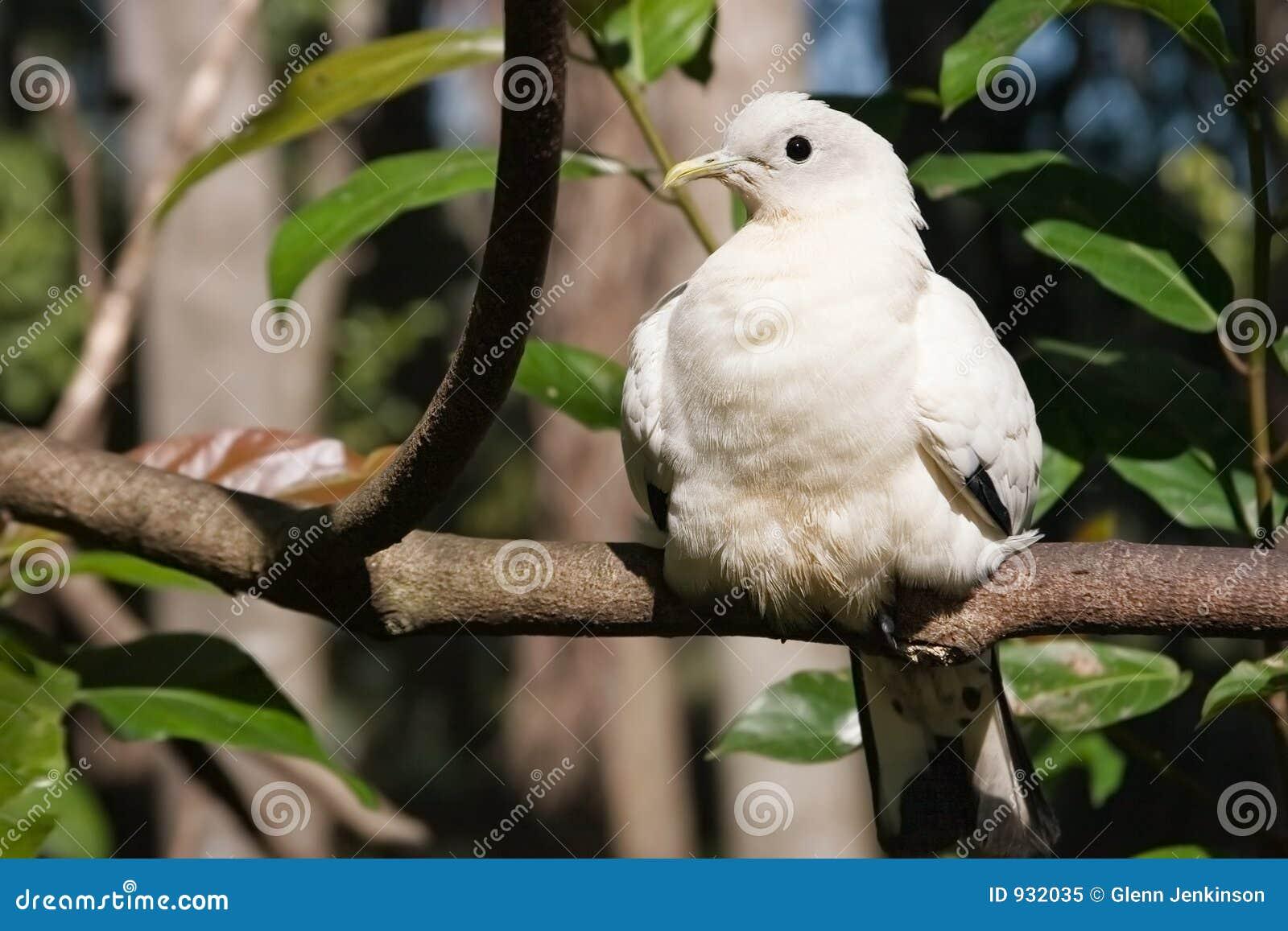 Weißes Vogelsonnen