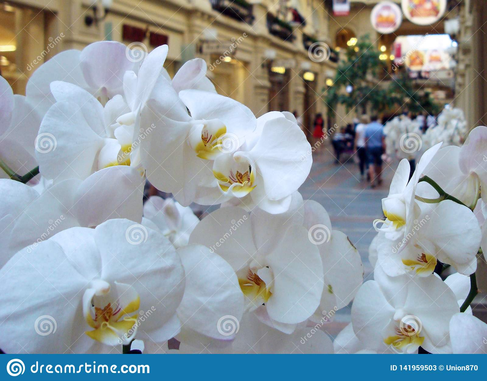Weiße Orchideenblumen auf dem Hintergrund eines großen Einkaufszentrums