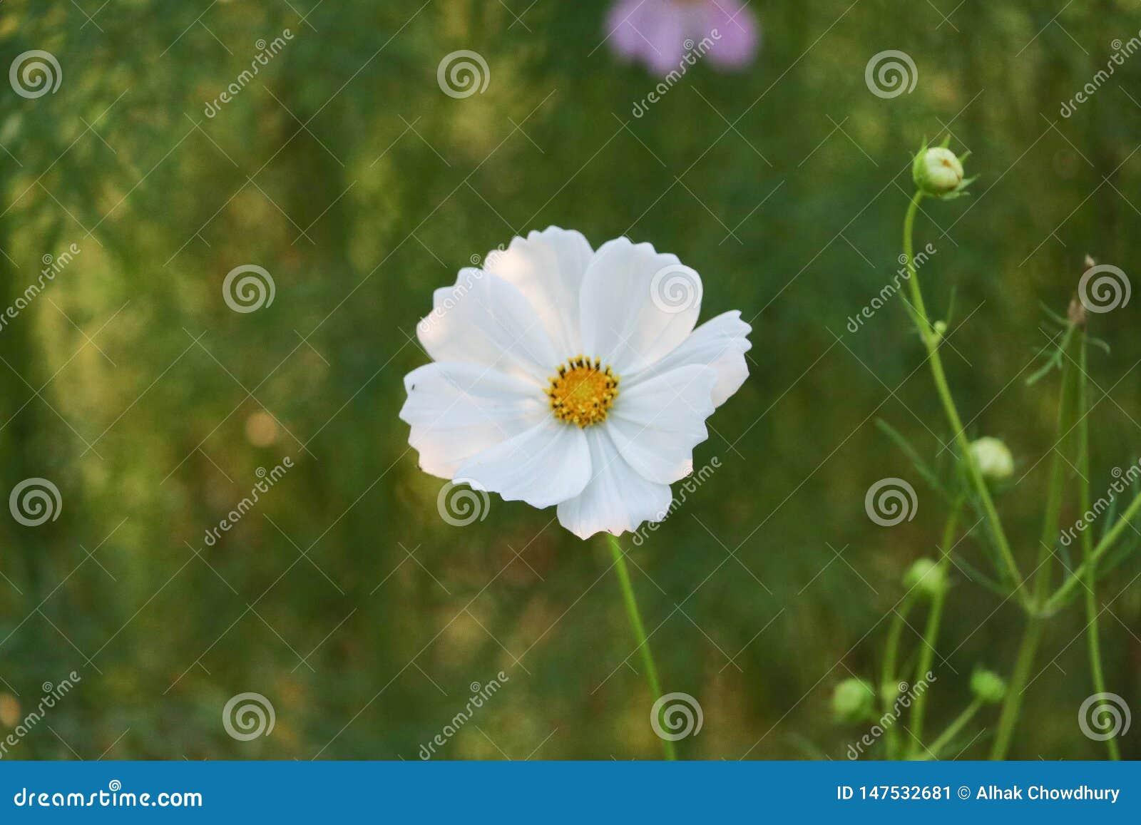 Wei?e Blume auf gr?nem Hintergrund