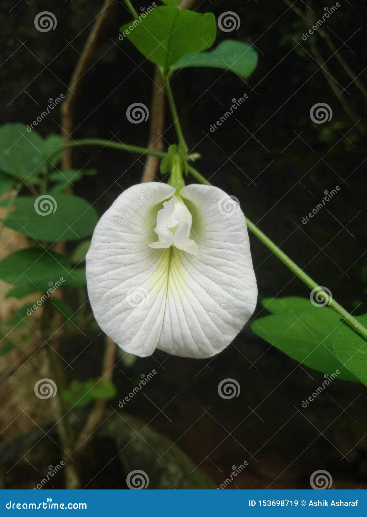 Wei?e Blume im Garten