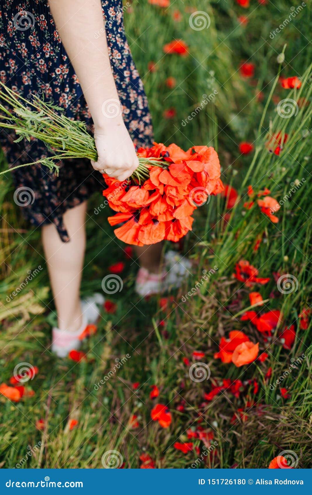 Weibliche Hände, die einen Blumenstrauß der roten Mohnblume halten