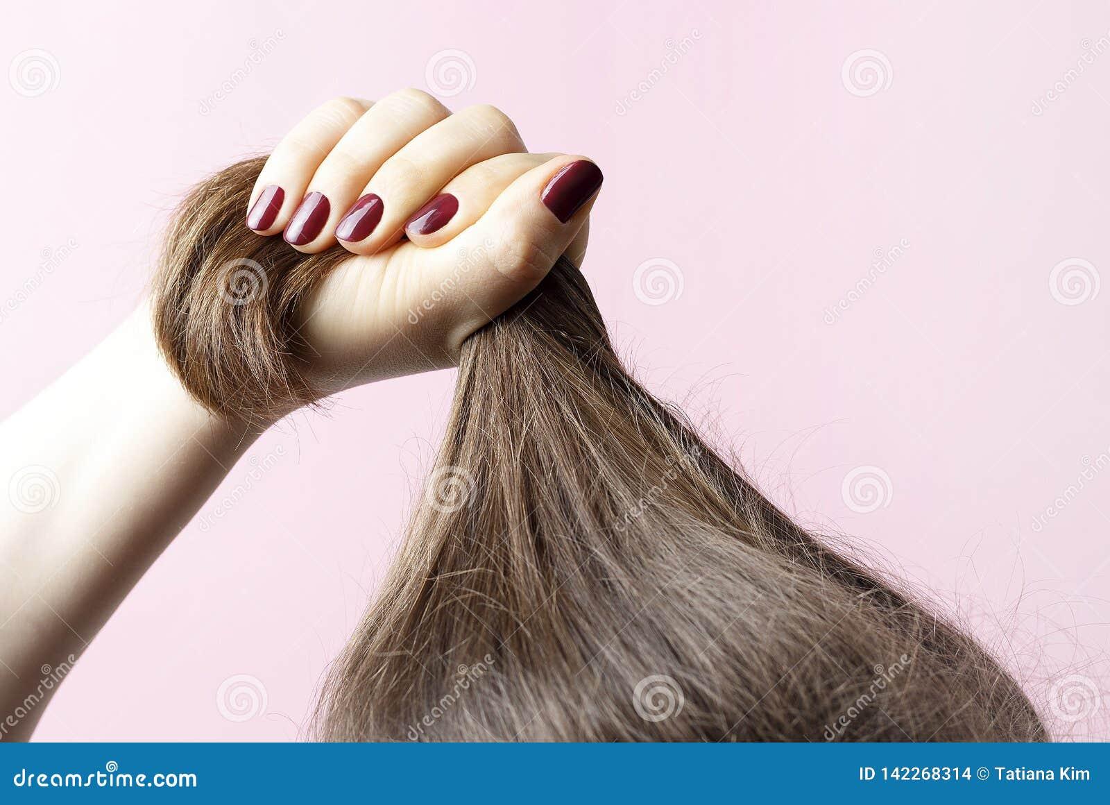 Weibliche Hände mit der roten Maniküre, die Haar, rosa Hintergrund, Haarpflegekonzept hält