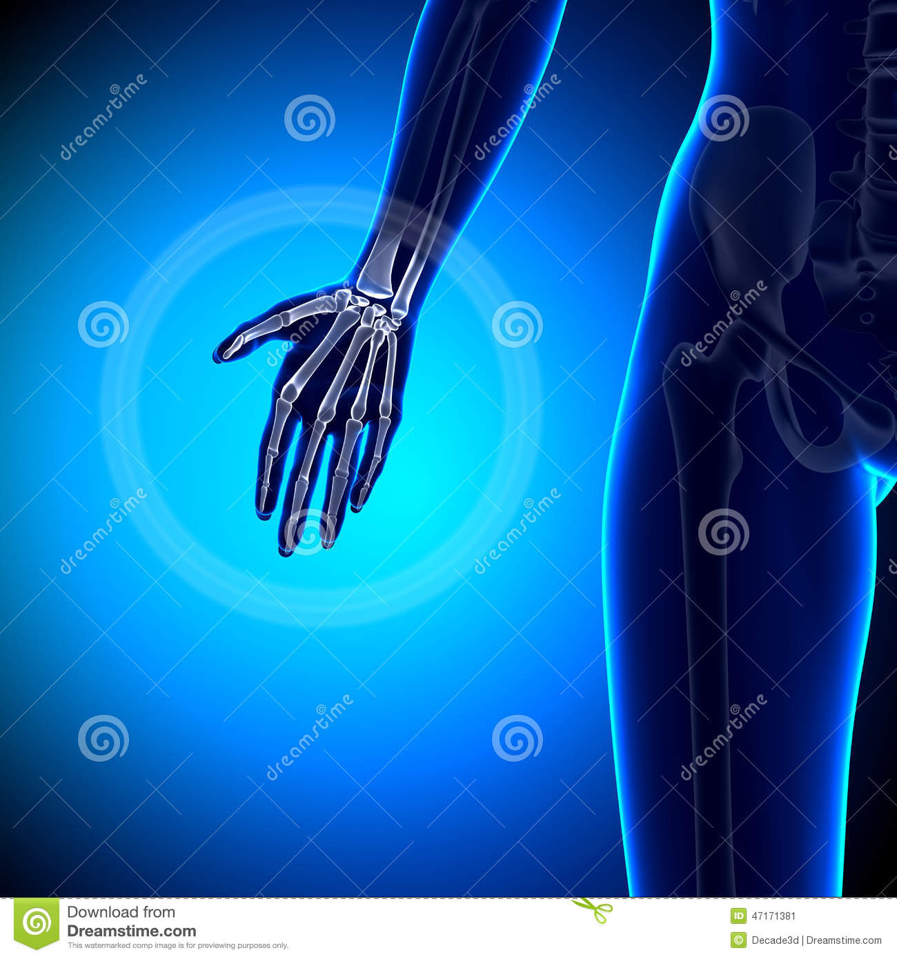 Weibliche Anatomie Stock Photos - Royalty Free Pictures