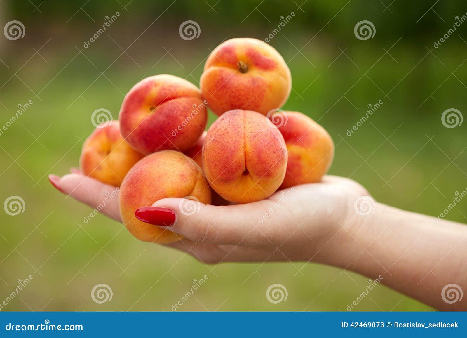 Weibliche Hand, die Aprikosen hält