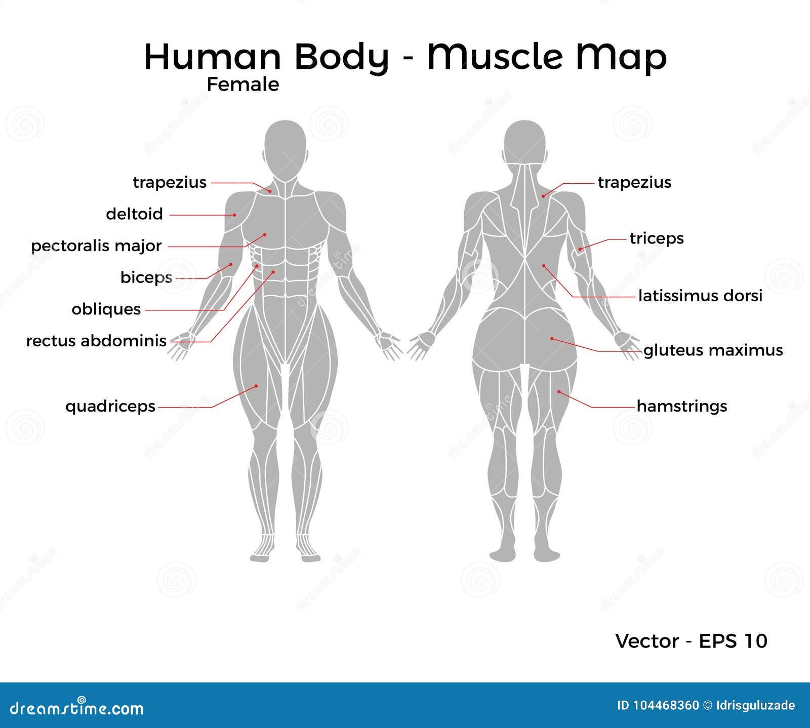 Großartig Menschliche Anatomie Weibliche Genitalien Fotos ...