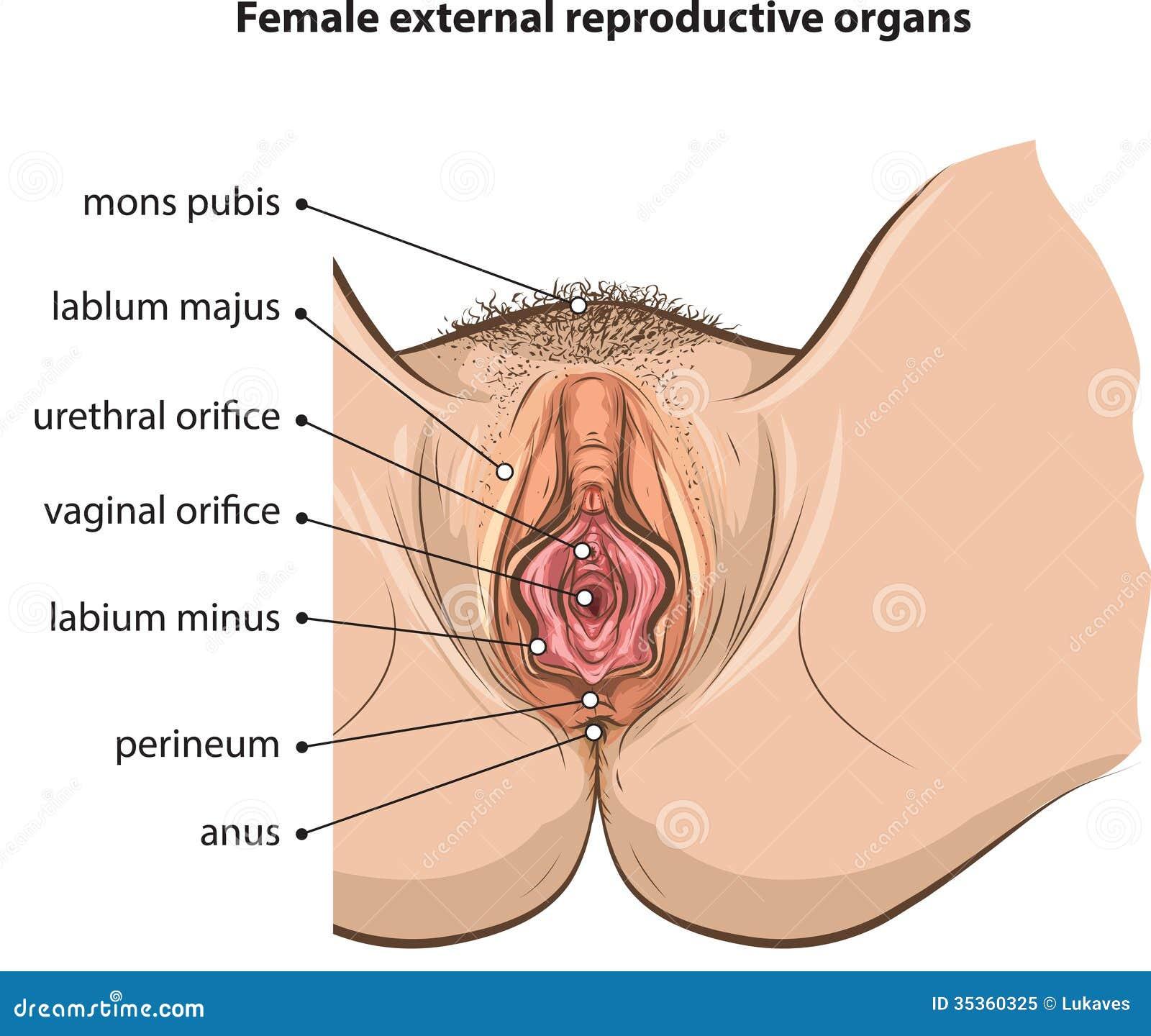 Freie weibliche Orgasmen wie