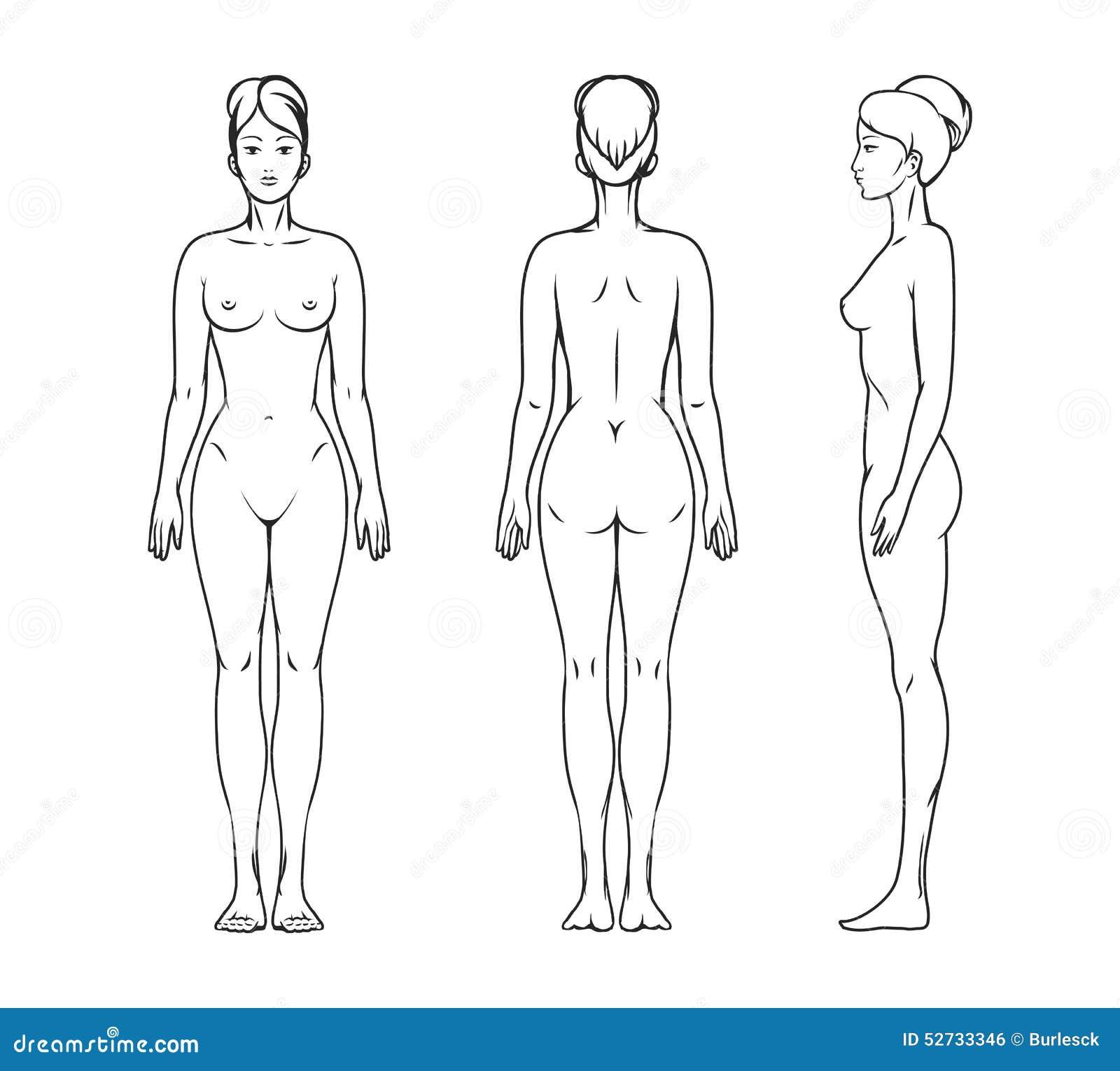 Weiblicher Körper vektor abbildung. Illustration von brust - 52733346