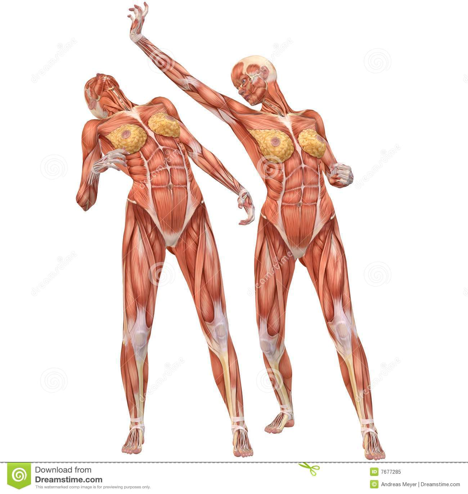 Großzügig Weiblicher Körper Anatomie Zeichnung Bilder - Physiologie ...