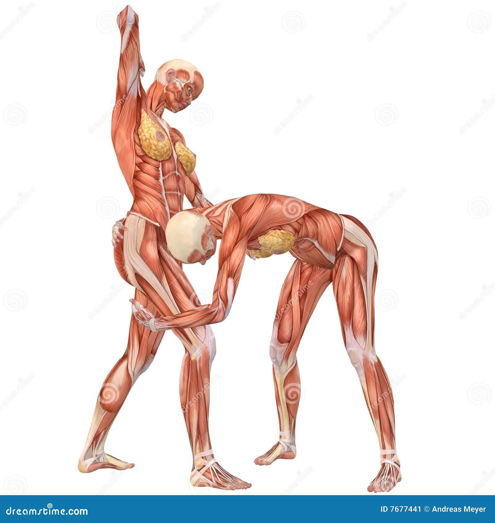 Erfreut Anatomie Des Weiblichen Menschlichen Körpers Bilder ...